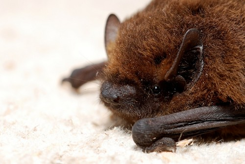 interesting_facts_about_bat4