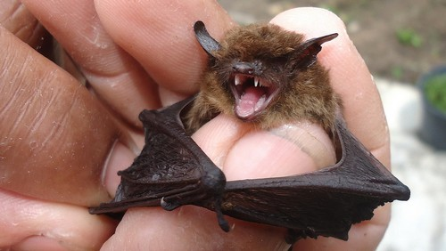 interesting_facts_about_bat6