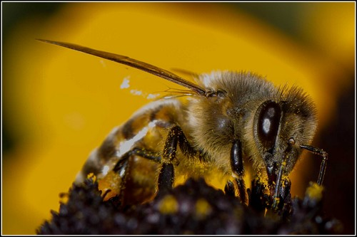 Interesting_Facts_About_Bee8-ap