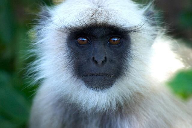 Monkey-5-ap