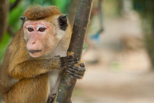 monkey-7