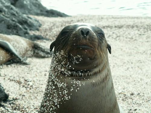 interesting_facts_about_sealion4