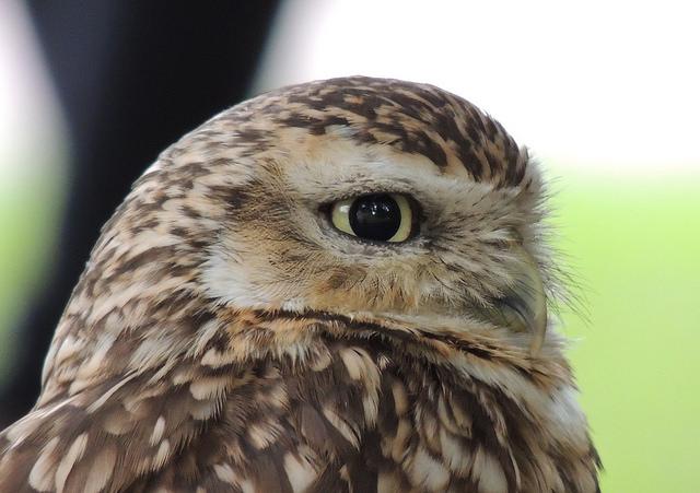 owl-5