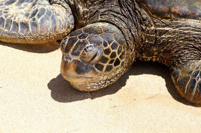 turtle-1-ap
