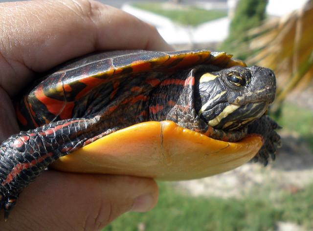 turtle-4