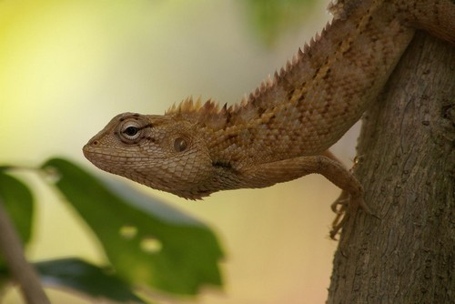 interesting_facts_about_chameleon3
