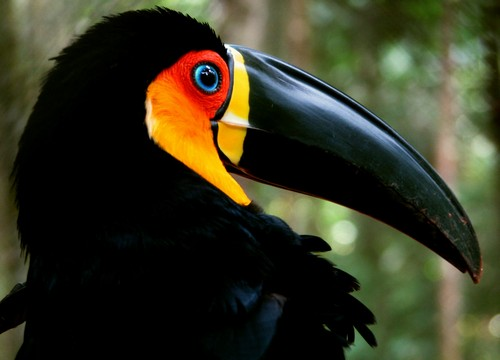 interesting_facts_about_toucan3