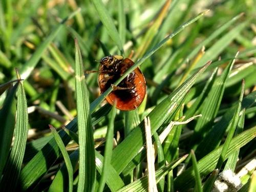 interesting_facts_about_ladybug5