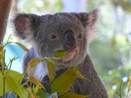 Marsupials - diet, habitat, species and size with pictures ...