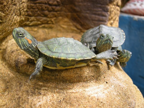 interesting_facts_about_reptiles2