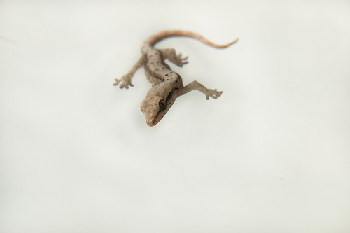 interesting_facts_about_reptiles6
