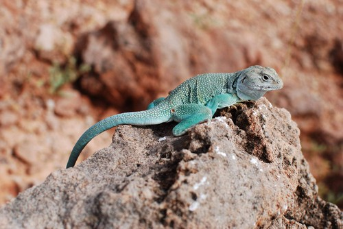 interesting_facts_about_reptiles7