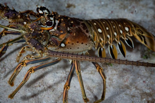arthropods facts habitat diet and size with pictures animalspal