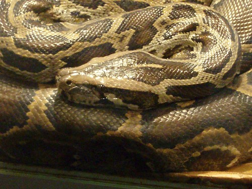 interesting_facts_about_anacondas2