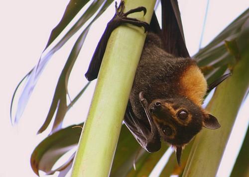 fruit-bats4