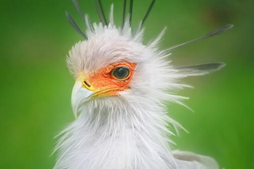 interesting_facts_about_secretary_birds8-ap