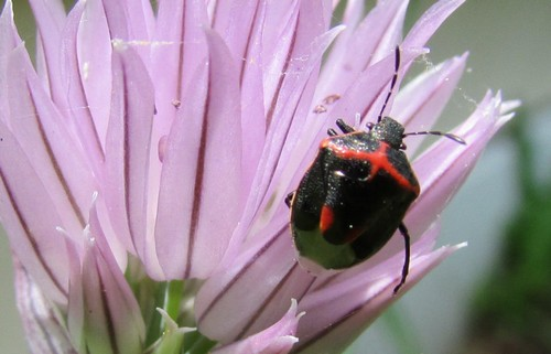 interesting_facts_about_stink_bug8-ap