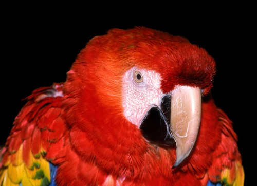 Help Protect the Amazon So Macaws and Other Wildlife Have a Place to Call Home