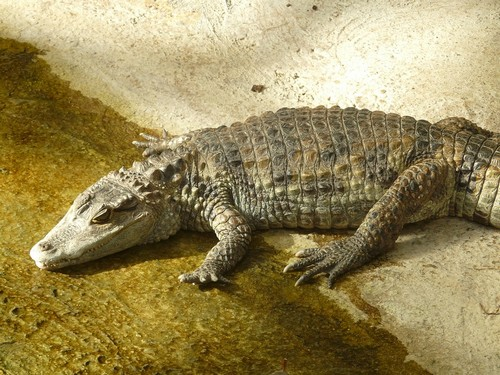 interesting_facts_about_tropical_rainforest_animals2