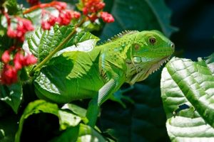 interesting_facts_about_tropical_rainforest_animals8