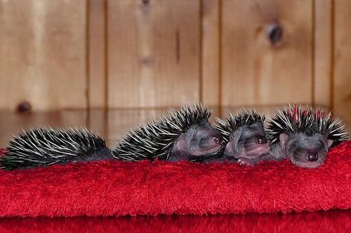 cute_baby_animals3