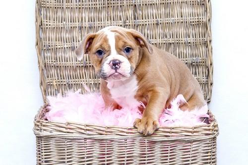 cute_baby_animals6