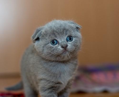 cute_baby_animals7