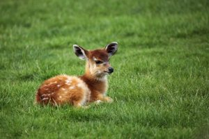 cute_baby_animals8