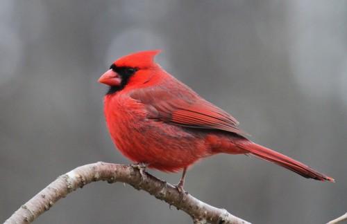 Birdhouses 101 - Cardina feeding preferencel