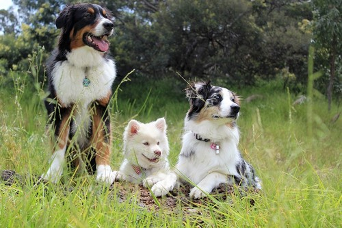 interesting_facts_about_dog_breeds6