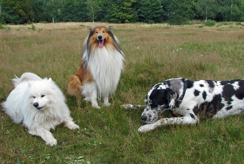 interesting_facts_about_dog_breeds7