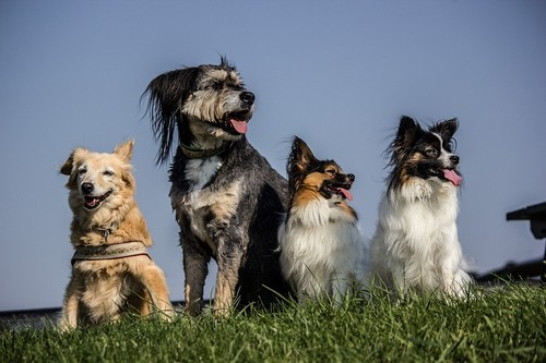 interesting_facts_about_dogs6