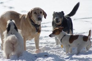 interesting_facts_about_dogs8