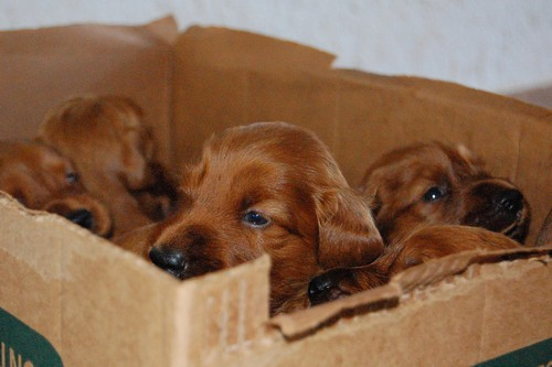 interesting_facts_about_puppies1