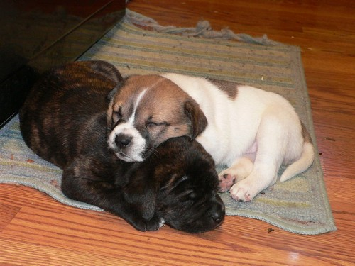 interesting_facts_about_puppies2