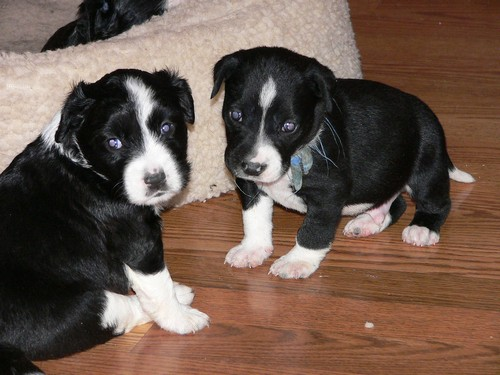 interesting_facts_about_puppies4